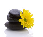 Spa accessories - stones and flower Stock Photos