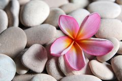 Spa and aromatherapy concept. Spa and aromatherapy stones with frangipani Stock Images