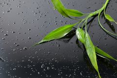 Spa background. Wet bamboo leaves on black glass. Spa background Royalty Free Stock Photography