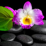 Spa background of closeup orchid flower dendrobium and green lea Stock Photos