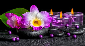 Free Spa Background Of Purple Orchid Dendrobium, Green Leaf Calla Lily And Candles On Black Zen Stones With Drops, Panorama Royalty Free Stock Images - 51708179