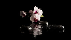 Spa background with orchids on massage stones Stock Image