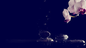 Spa background with pink orchids and fresh water splashing on bl Royalty Free Stock Images