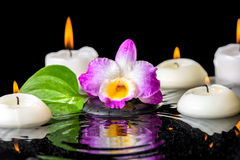 Spa background of purple orchid dendrobium, green leaf with dew Stock Photo