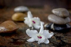 Spa background - stones and orchid flowers over dark. Spa background - stones and orchid flowers over dark royalty free stock photo