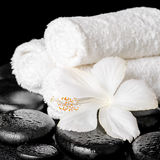 Spa background of white hibiscus flower and towels on zen basalt Stock Image