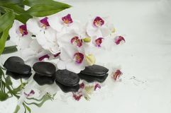 Spa Background - orchids black stones and bamboo on water stock photo