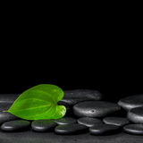 Spa background of zen stones and green leaf on black background Stock Photography