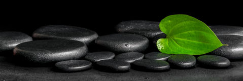 Spa background of zen stones and green leaf on black background. With dew, panorama royalty free stock image