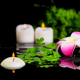 Spa bakgrund av plumeriablomman, grön filialsparris, ormbunke Royaltyfri Foto