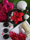 Spa beauty. Exotic tropical flowers sea shells stons towels salt soap on green leaves Royalty Free Stock Photo