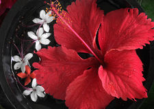 Spa beauty. Exotic tropical flowers Royalty Free Stock Photos
