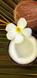 Spa beauty. Exotic tropical flowers coconuts on palm leaf Royalty Free Stock Photography