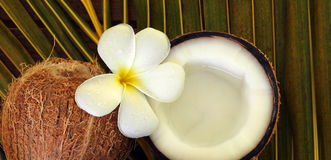 Spa beauty. Exotic tropical flowers coconuts on palm leaf Stock Images