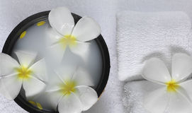 Spa beauty. Exotic tropical flowers  on white towels bowl Stock Photos