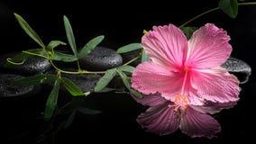 Spa begrepp av den blommande rosa hibiskusen och gräsplanrankan Arkivfoton
