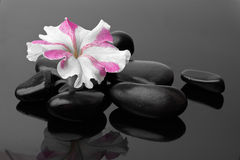 Spa with black stones Stock Images