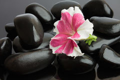 Spa with black stones Royalty Free Stock Photography