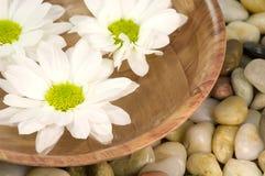 Spa bowl Royalty Free Stock Image