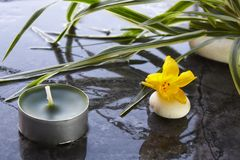 Spa composition. With yellow flower Stock Photos