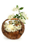 Spa composition with branch of bird cherry Stock Image