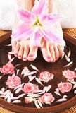 A spa composition of feet and petals in a bowl Stock Image