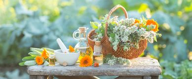 Spa composition with Fresh herbs, calendula and different types of oils. Royalty Free Stock Photo