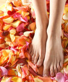 Spa composition of legs and petals. A beautiful spa composition of legs and petals Stock Image