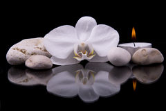 Spa composition with orchid flower and sea stones Stock Photography
