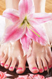 A spa composition of feet and petals in a bowl Royalty Free Stock Photo