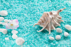 Spa composition with shell and  toning sea crystals Stock Images