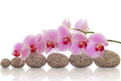 Spa composition of stones and orchid Royalty Free Stock Images