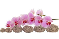 Spa composition of stones and orchid isolated on white Stock Image