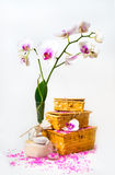 Spa composition with twig white orchid. Stock Images