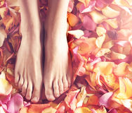 Spa compositions of sexy female legs and petals Stock Photos