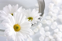 Spa concept. White flowers and a bowl with water Royalty Free Stock Images