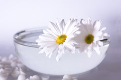 Spa concept. White flowers and a bowl with water Stock Photography