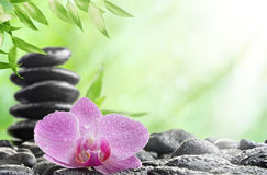 Spa concept. With zen stones and  orchid Stock Photos