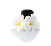 Spa concept. Zen stones with two frangipani flower Royalty Free Stock Photo