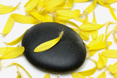 Spa concept. Spa Stone with yellow peals Royalty Free Stock Photography
