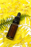 Spa concept. Bottle of massage oil with fern leaf on fresh flowers - beauty treatment Royalty Free Stock Images