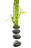 Spa concept-. Bamboo grove and orchid Royalty Free Stock Images