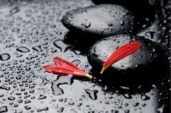 Spa concept. Spa Stones and red petals Stock Image