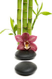 Spa concept. Bamboo grove and orchid with stones Royalty Free Stock Images