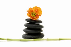 Spa concept. Macro of camellia flower and black Stones balanced stones and lucky bamboo stick Stock Image