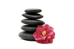 Spa concept. Red camellia and spa black stones isolated Royalty Free Stock Image
