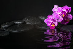 Spa concept of beautiful branches stripped lilac orchid Stock Photography