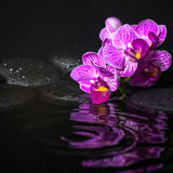 Spa concept of beautiful branches stripped lilac orchid royalty free stock photography