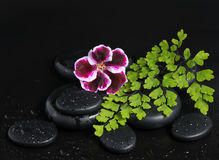 Spa concept with beautiful dark purple flower, green branch Stock Image