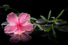 Spa concept  of  blooming pink hibiscus and green tendril Royalty Free Stock Photography